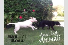 Foto B&B Casa di Rosa